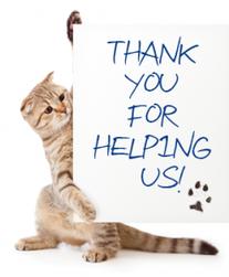 donation-cat_2